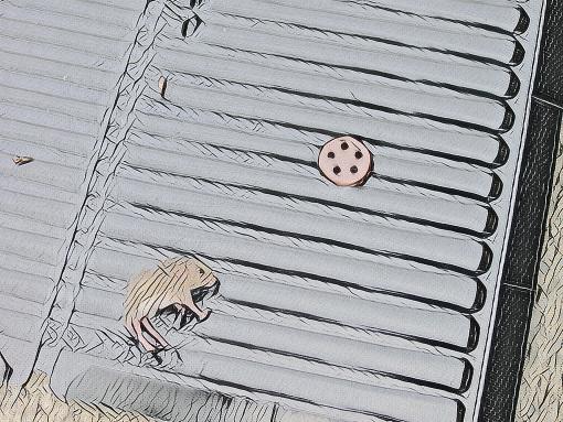 ネズミ捕りの粘着シートにかかった子ネズミ