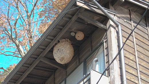 軒先に作られたスズメバチの巣