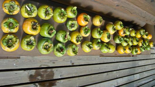 柿をウッドデッキに並べて干して置く